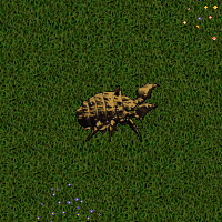 Bronze Iron Beetle