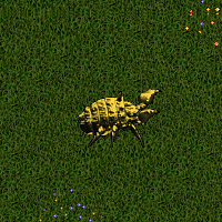Gold Iron Beetle