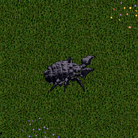 Shadow Iron Beetle